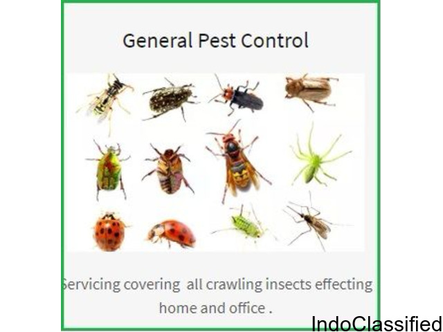 Call Us for Commercial and Domestic Pest Control in Kolkata