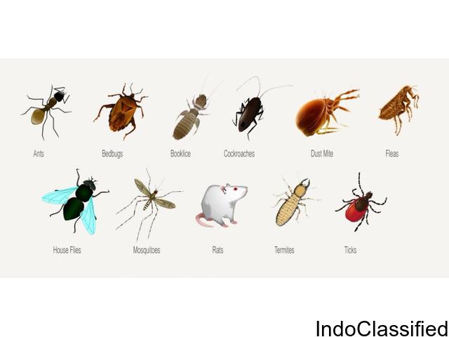 Pest Control Services in Sarita Vihar, Delhi