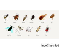 Pest Control Services in Sarita Vihar, Delhi