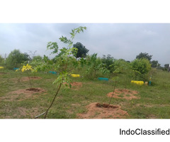 plots for sale at yadhadi ( kolanpaka) including plantation ,cottage and plantation.
