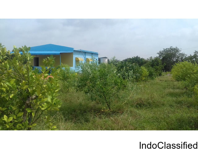 plots for sale at yadhadi ( kolanpaka) including plantation ,cottage and plantation.