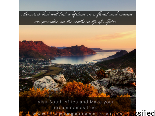 Looking for a perfect South Africa Tour Package? Visit Flamingo Today!