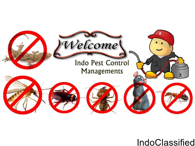 Pest control services in Chandigarh, Panchkula