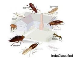 Cockroaches Pest Control Services in Delhi