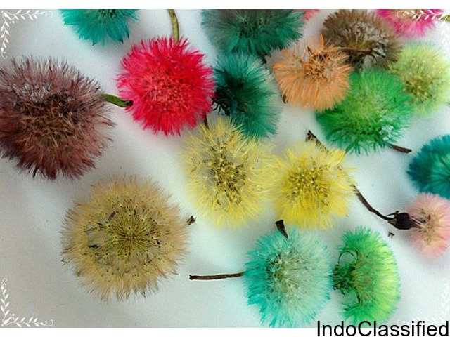 Dandelions for handmade and creativity