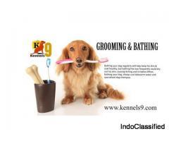 Dog training center bin hyderabad - kennels9