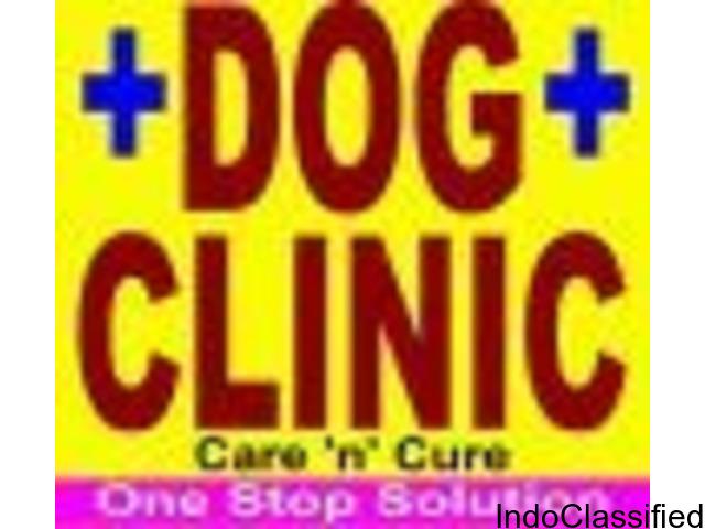 Dog clinic in Jagatpura Jaipur | Dog clinic in Jaipur