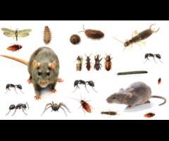 Pest Control Service in RK Puram
