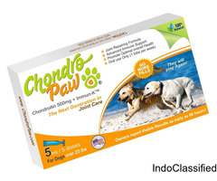 Arthritis in Dogs? End Worries - Safe, Effective & 24/7 Results