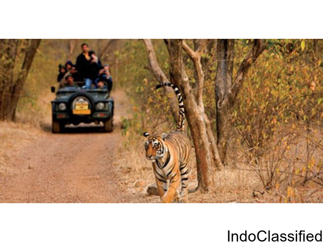 Golden Triangle Tour by car