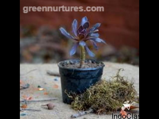 Buy Plants Online Delhi