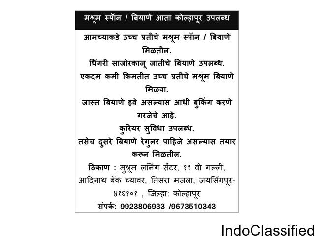 Buy Mushroom spawn at Kolhapur, sangli, jaysingpur