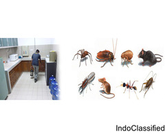 Residential Pest Control Services in Delhi