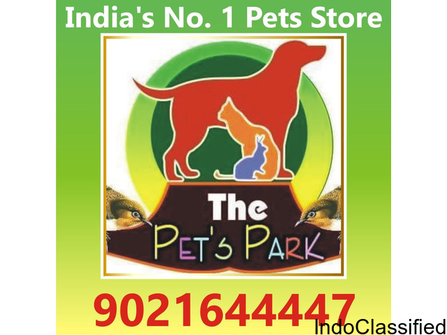 THE PETS PARK -DOG PUPPIES THE PETS -9021644447