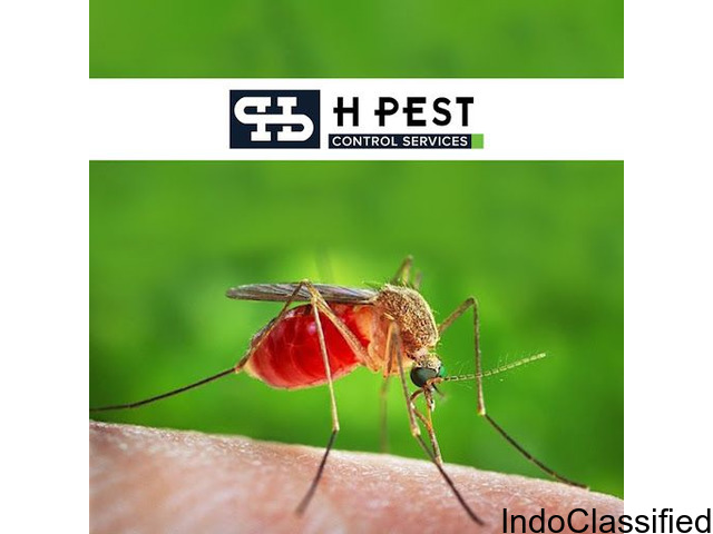 Professional Pest Control Services | Hpest