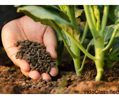Buy Organic Bio fertilizer for better Soil Productivity