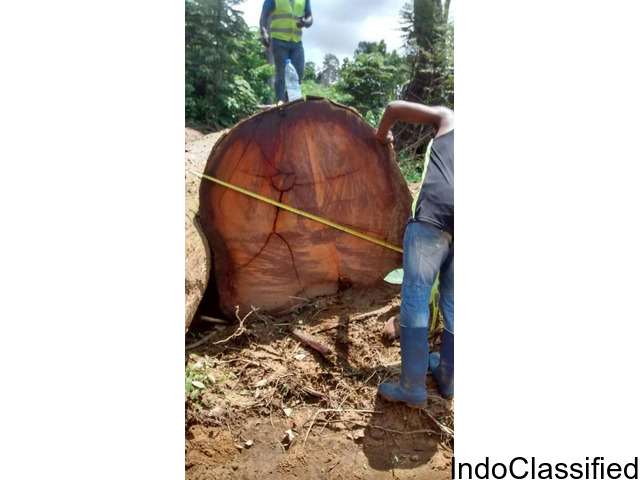 wood available in Cameroon