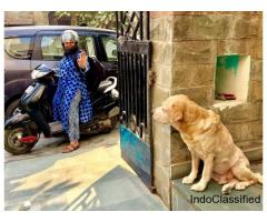 Home Base Dog Boarding and Dog Care in Gurgaon, Delhi - Happy Pettings