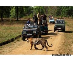 One Day Mysore to Madikeri / Nagarhole Jungle Safari Trip by Car