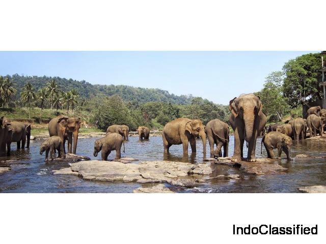 One Day Mysore to Madikeri / Nagarhole Jungle Safari Trip by Car