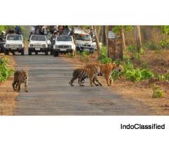 Mysore – Nagarhole – Iruppu Falls