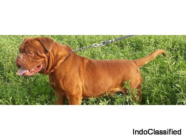 Prayag Pet World And Clinic Allahabad