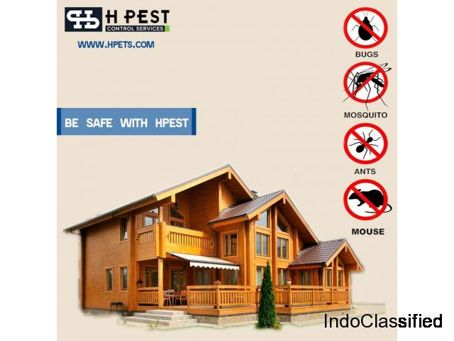 Cockroaches Pest Control Services in Hyderabad