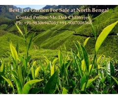 Sell Tea Garden in North Bengal in Profitable Price