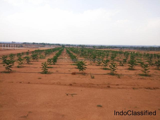 Best organic farming  land for sale at Hyderabad in a low budget