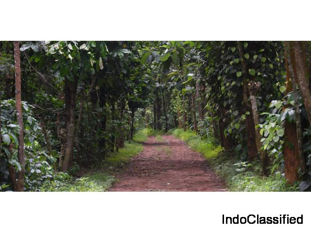 Triwoods Plantation Farmstay