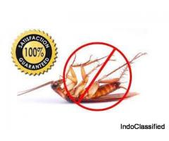 cockroach control treatment by pest control services and products with gurantee