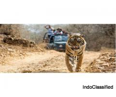 Find cheap yet luxurious Jim Corbett Packages starting @2666/-