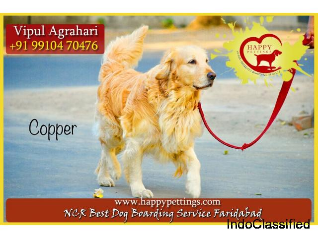 Pet Boarding Service in Gurgaon, Delhi, Noida, Faridabad - Happy Pettings