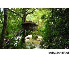 Get ready to stay at the tree houses in Wayanad - Price starts from 5999/-