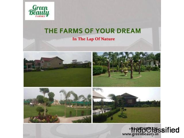 Farm House land in Noida