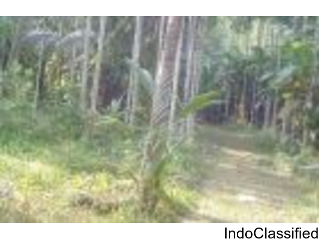 9 acres of river side land for sale in Nileswaram Kasargod