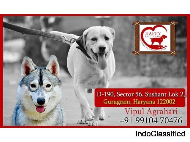 Best Pet Crèche Noida, Gurugram, Delhi And Faridabad