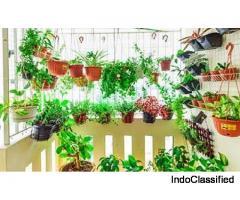 Urban Gardening Services | Bagbani