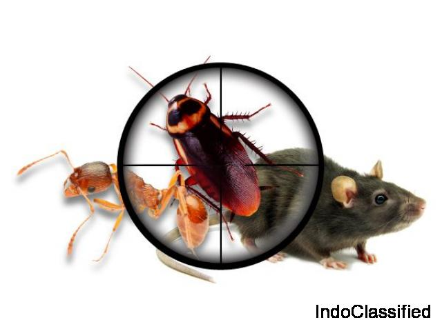 Pest control Chennai