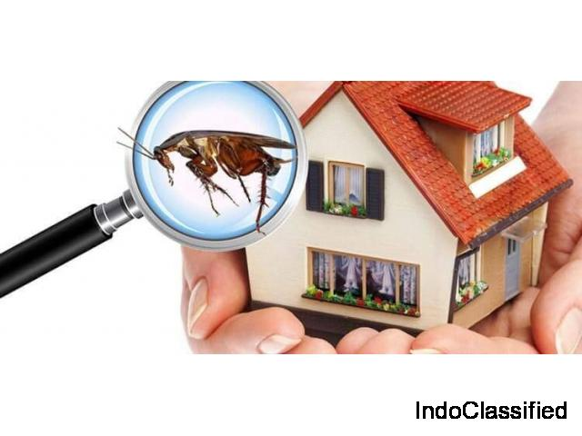 Best pest control services in Chennai