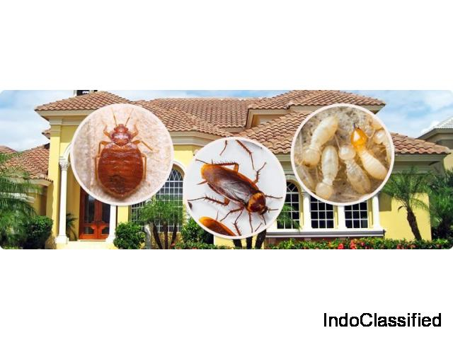 Termite control Chennai