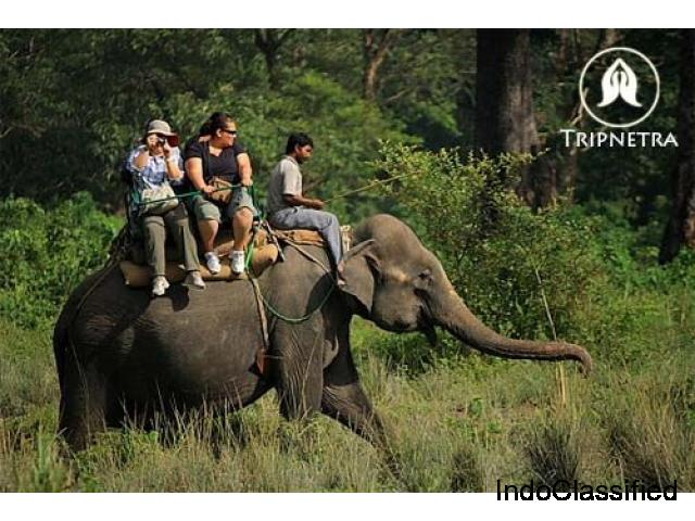 Jaldapara Safari Timings,Online Booking,Elephant,Jeep Safari