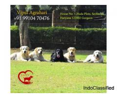 Best Dog Care And Pet Crèche Noida, Delhi, Faridabad And Gurgaon By Happy Pettings