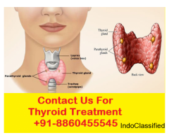 Thyroid doctor in Rudrapur| +91-9205919354 |