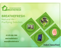 Natural Air Purifiers Solution |Breath Fresh Air Purifier