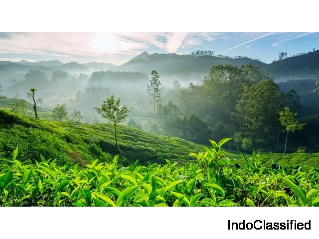 Grab the Deals on Kerala Package Tour - Start @ 13100 INR. Grab it Now