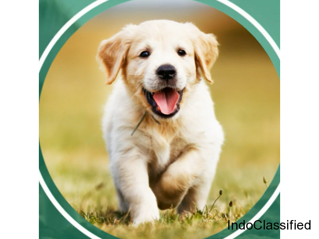 Dog Walking, Training, Grooming and Boarding Services