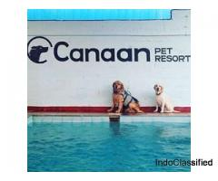 Hotel for Dogs in Bangalore