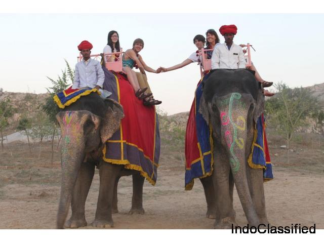 Elefanjoy Jaipur| Elephant Ride & Safari