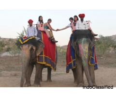 Elefanjoy Jaipur| Elephant Ride & Safari